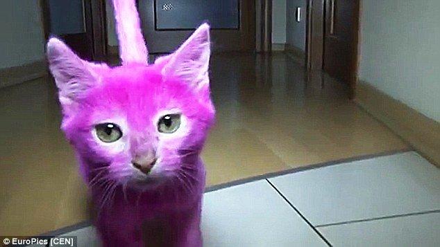 C&M - News :::... :: Thema anzeigen - Katze stirbt, weil Besitzerin ...